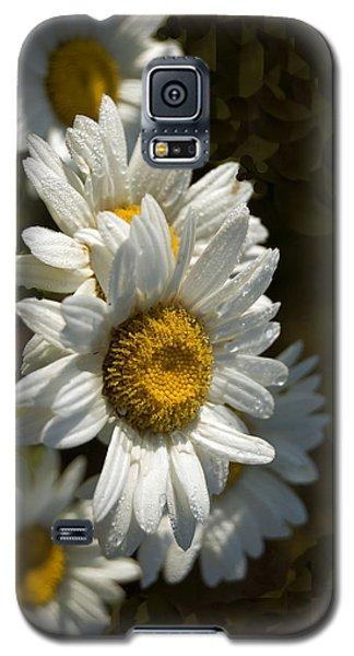 Galaxy S5 Case featuring the photograph Cascading Daisy by Elsa Marie Santoro
