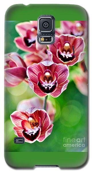 Cascading Miniature Orchids Galaxy S5 Case by Kaye Menner