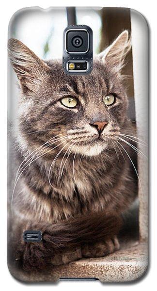 Cat #2480 Galaxy S5 Case