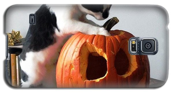 Galaxy S5 Case featuring the photograph Cat And Pumpkin by Vicky Tarcau