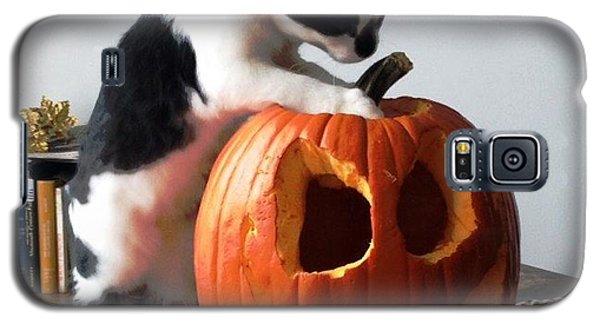 Cat And Pumpkin Galaxy S5 Case