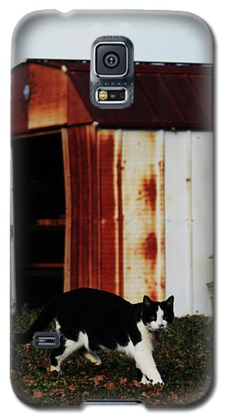 Cat And The Tool Shed Galaxy S5 Case by Kim Henderson