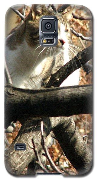 Cat Hunting Bird Galaxy S5 Case