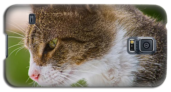 Cat Hunting Galaxy S5 Case