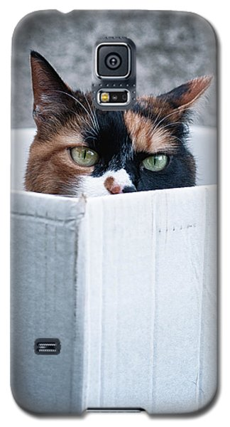 Galaxy S5 Case featuring the photograph Cat In The Box by Laura Melis