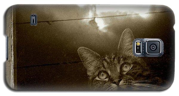 Cat In The Window Galaxy S5 Case