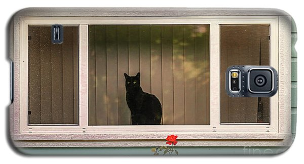 Cat In The Window Galaxy S5 Case by Robert Frederick