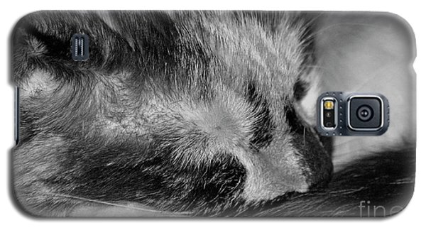Galaxy S5 Case featuring the photograph Cat Nap by Juls Adams