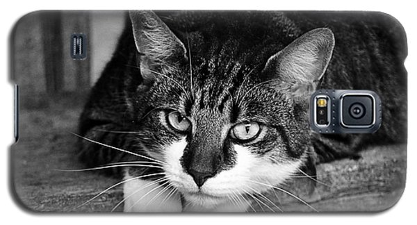 Cat Naps 2 Galaxy S5 Case