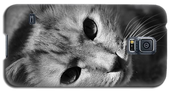 Cat Naps Galaxy S5 Case