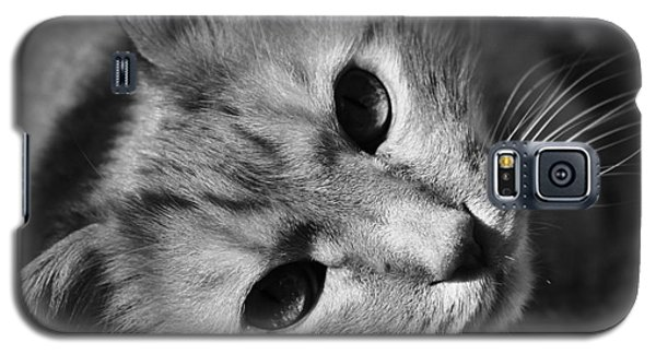 Cat Naps Galaxy S5 Case