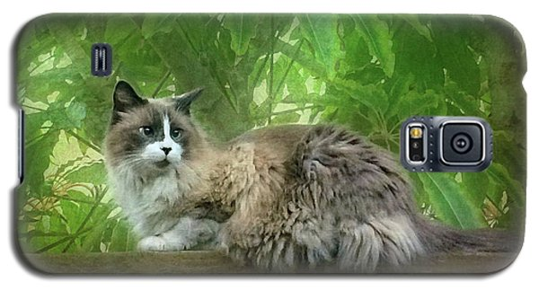 Cat On The Railing Galaxy S5 Case