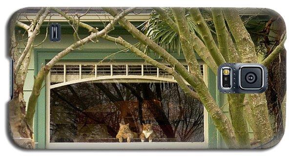 Cat Pals Waiting Galaxy S5 Case