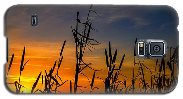 Galaxy S5 Case featuring the photograph Cat Tails At Sunrise  by John Harding