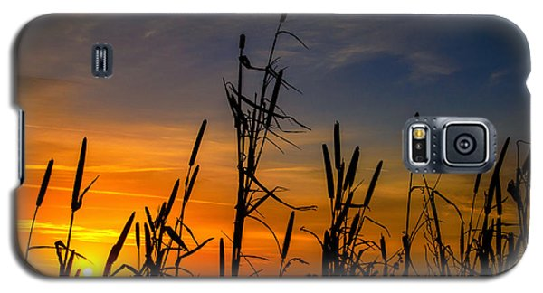 Cat Tails At Sunrise  Galaxy S5 Case