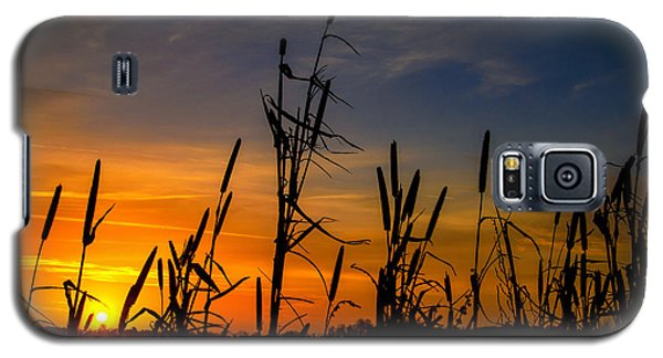 Cat Tails At Sunrise  Galaxy S5 Case by John Harding