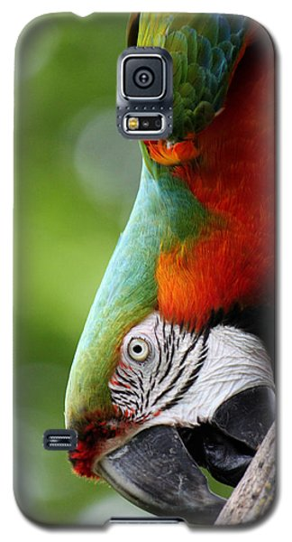 Catalina Macaw II Galaxy S5 Case