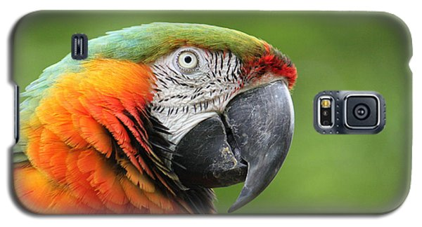 Catalina Macaw Galaxy S5 Case