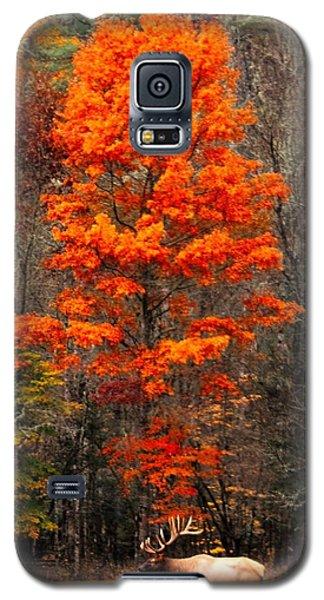 Cataloochee Color Galaxy S5 Case