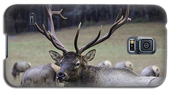Cataloochee Elk Galaxy S5 Case