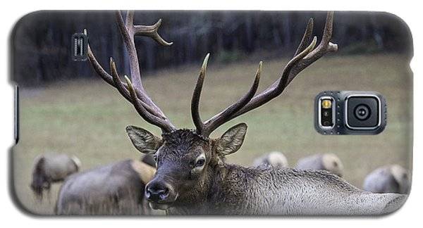 Cataloochee Elk Galaxy S5 Case