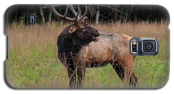 Galaxy S5 Case featuring the digital art Cataloochee Valley Elk  by Chris Flees