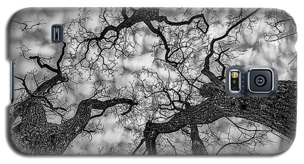 Catalpa And Altostrato Q Galaxy S5 Case