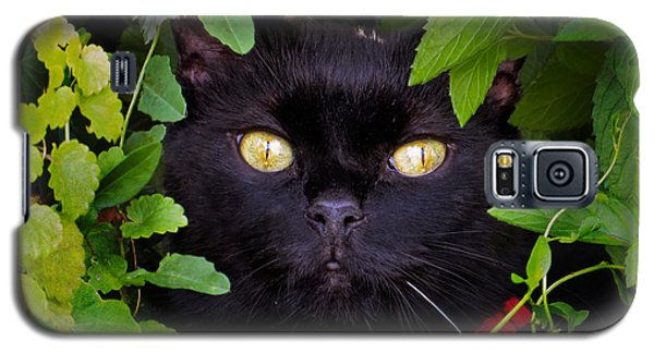 Catboo In The Wild Galaxy S5 Case by Shawna Rowe