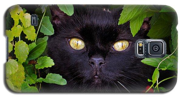 Catboo In The Wild Galaxy S5 Case