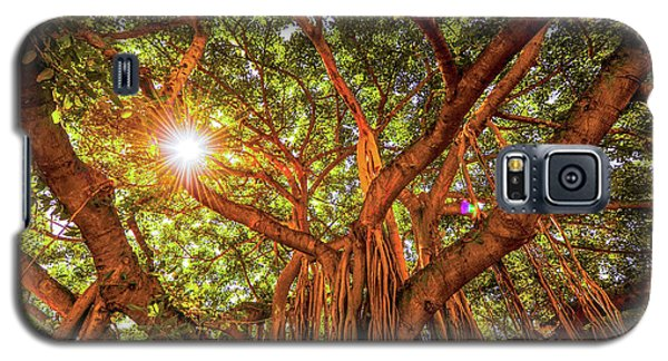 Catch A Sunbeam Under The Banyan Tree Galaxy S5 Case