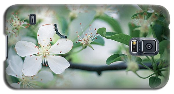 Caterpillar On A Tree Blossom Galaxy S5 Case