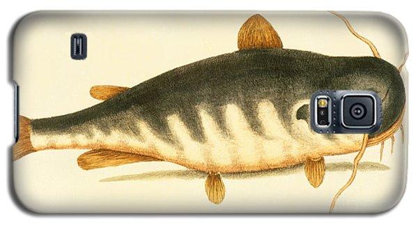Catfish Galaxy S5 Case by Mark Catesby