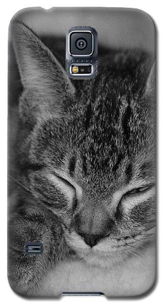 Catnap Galaxy S5 Case