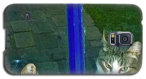 Cats On Baylor Street Galaxy S5 Case