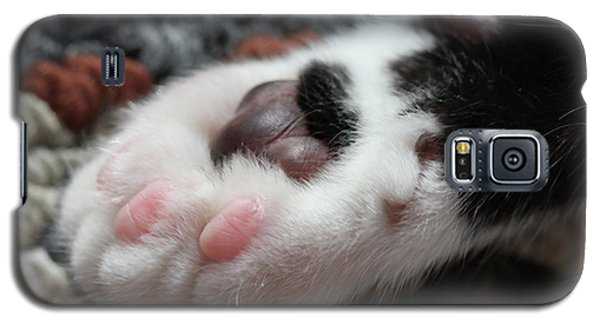 Galaxy S5 Case featuring the photograph Cats Paw by Kim Henderson