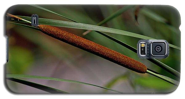 Cattail II Galaxy S5 Case by Douglas Stucky