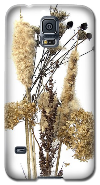 Galaxy S5 Case featuring the digital art Cattails And November Flowers II by Lise Winne