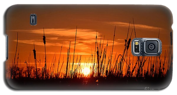 Cattails And Twilight Galaxy S5 Case