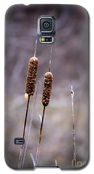 Galaxy S5 Case featuring the photograph Cattails by Brenda Bostic