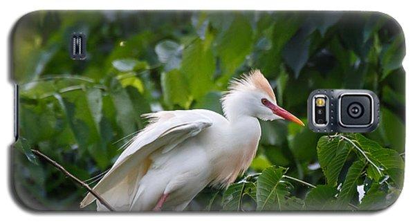 Cattle Egret At Rest Galaxy S5 Case