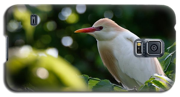 Cattle Egret In Oklahoma Galaxy S5 Case