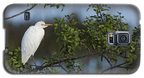 Cattle Egret In The Morning Light Galaxy S5 Case
