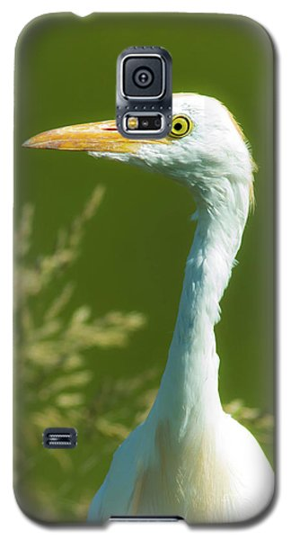 Cattle Egret  Galaxy S5 Case by Robert Frederick