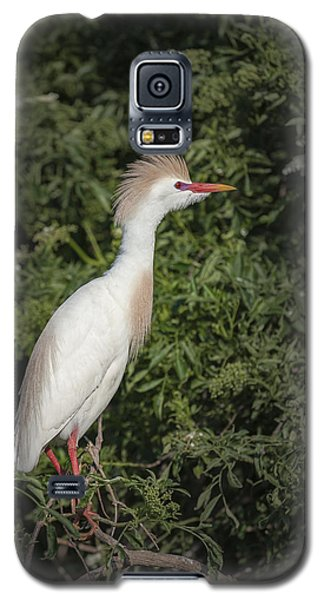 Galaxy S5 Case featuring the photograph Cattle Egret by Tyson and Kathy Smith