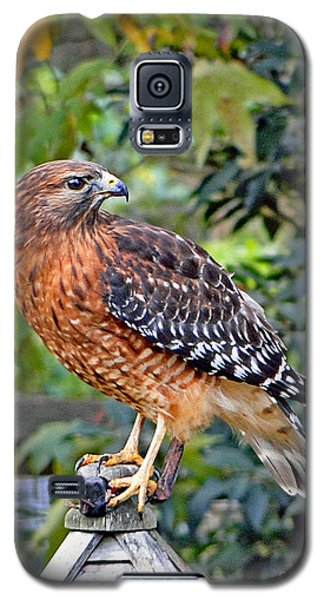 Caught In The Talons Galaxy S5 Case by Sue Melvin