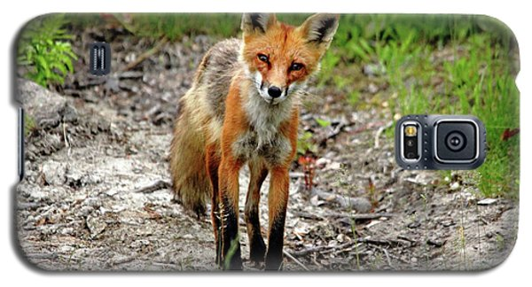 Galaxy S5 Case featuring the photograph Cautious But Curious Red Fox Portrait by Debbie Oppermann