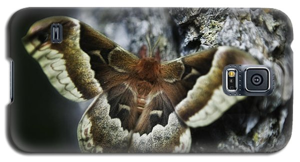 Cecropia Moth Galaxy S5 Case