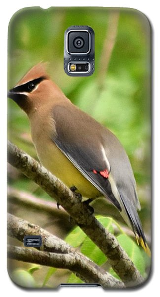 Cedar Wax Wing 1 Galaxy S5 Case