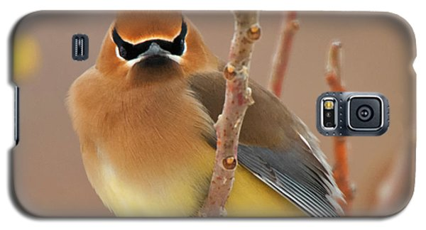 Cedar Wax Wing Galaxy S5 Case