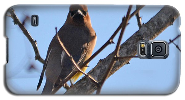 Cedar Wax Wing On The Lookout Galaxy S5 Case